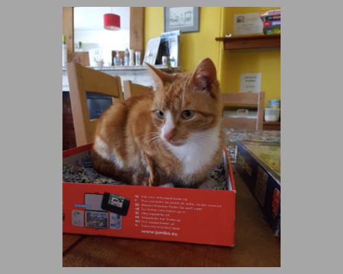 Kendal Hostel, Lakes District, England, UK, Cat in Puzzle