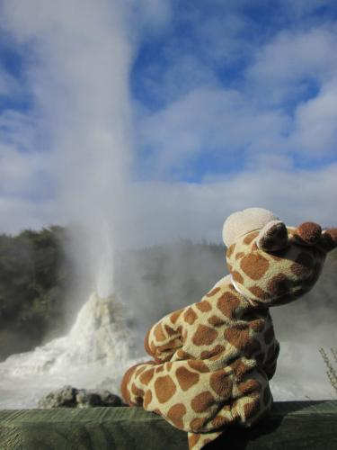 Noah checking out the Lady Knox Geyser in Rotorua New Zealand