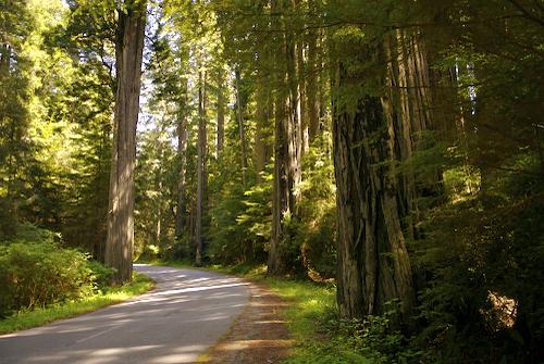 redwood hostel forest road