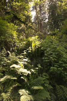 redwood hostel nature