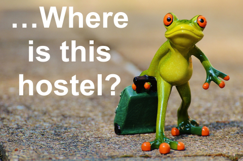 Funny frog with a suitcase looking lost